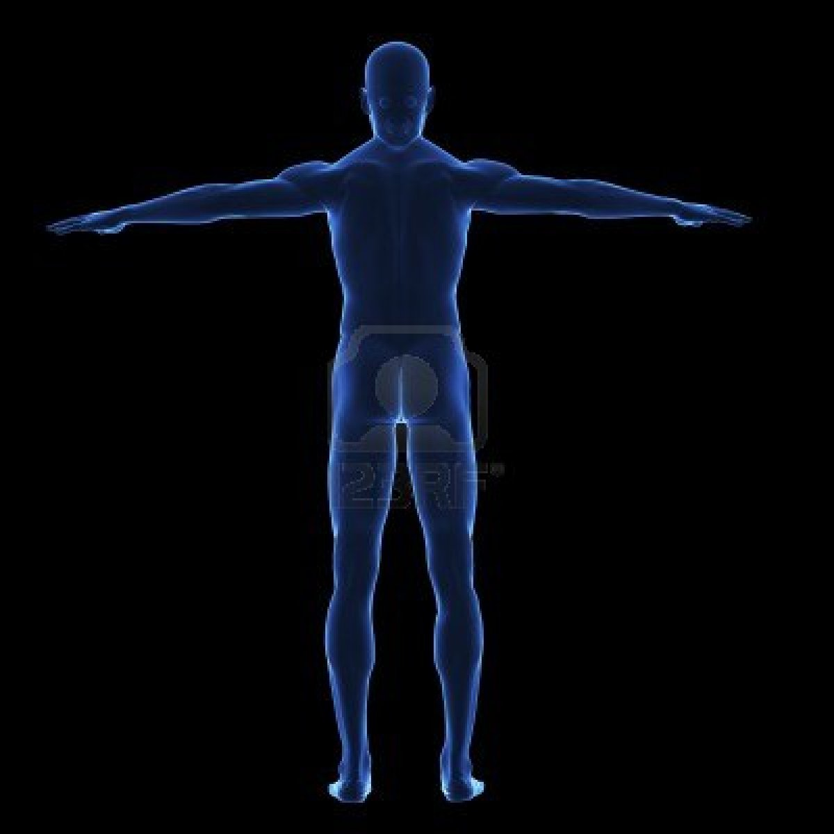 5993906 X Ray Human Body From Behind On Lack Background IsolatedjpgX Ray Whole Body